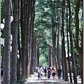 江原道春川市南怡島-2018-08-12.jpg