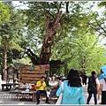 江原道春川市南怡島-2018-08-20.jpg