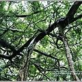 鸞山部落(會走路的樹)-2018-08-15.jpg
