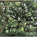 鸞山部落(會走路的樹)-2018-08-17.jpg