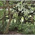 鸞山部落(會走路的樹)-2018-08-24.jpg