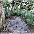 鸞山部落(會走路的樹)-2018-08-26.jpg