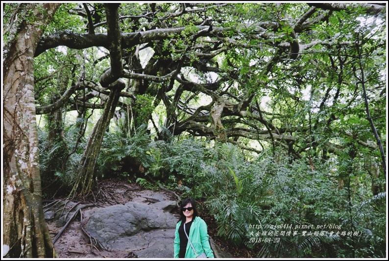 鸞山部落(會走路的樹)-2018-08-29.jpg