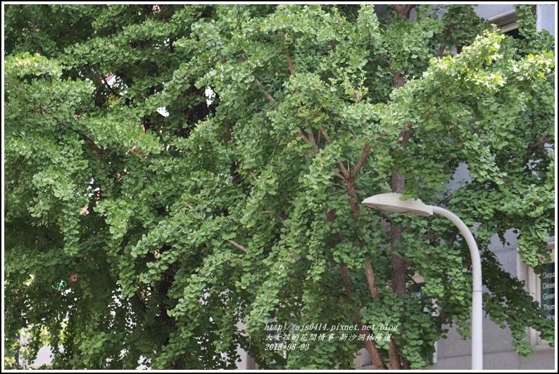 新沙洞林蔭道-2018-08-04.jpg