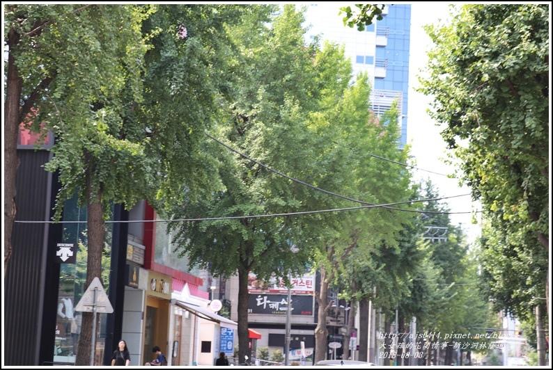 新沙洞林蔭道-2018-08-05.jpg