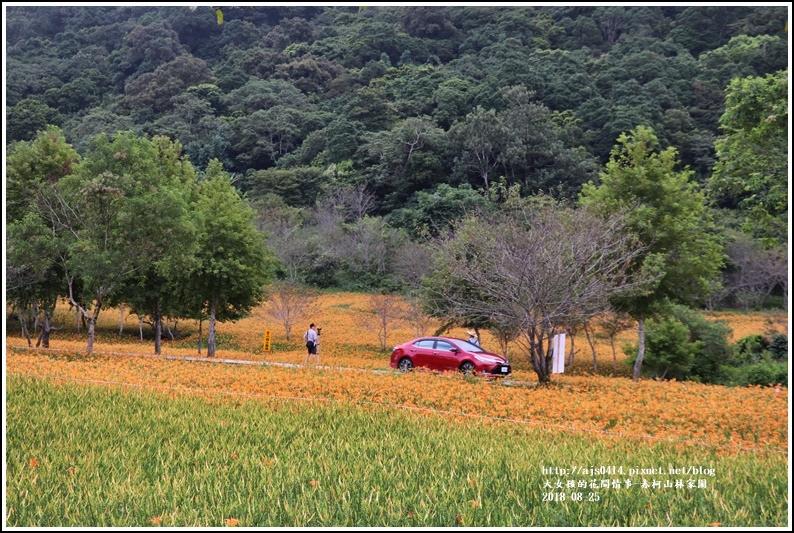 赤柯山金針花-2018-08-08.jpg