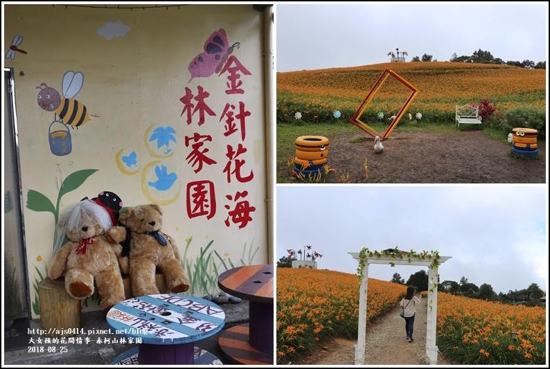 赤柯山金針花-2018-08-09.jpg