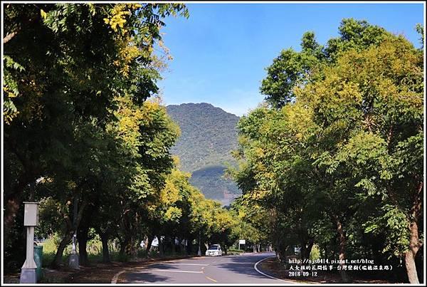 台灣欒樹(瑞穗溫泉路)-2018-09-13.jpg