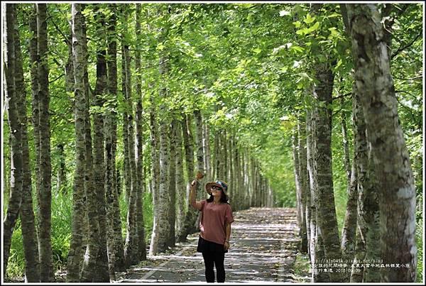 大農大富平地森林(南自行車道楓葉林)-2018-09-11.jpg