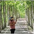 大農大富平地森林(南自行車道楓葉林)-2018-09-12.jpg