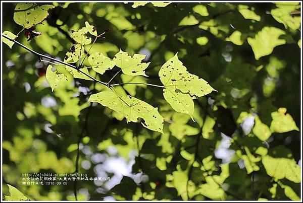 大農大富平地森林(南自行車道楓葉林)-2018-09-25.jpg