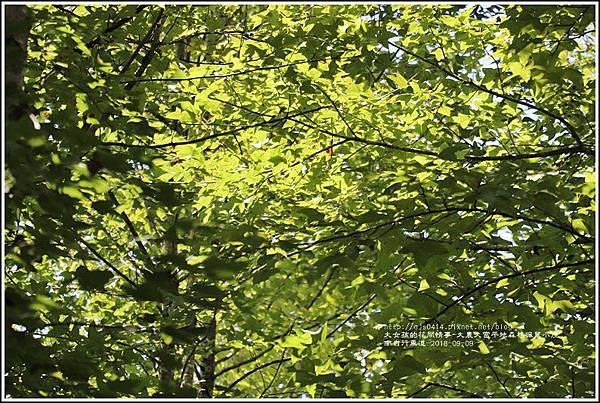 大農大富平地森林(南自行車道楓葉林)-2018-09-26.jpg