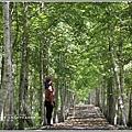 大農大富平地森林(南自行車道楓葉林)-2018-09-29.jpg