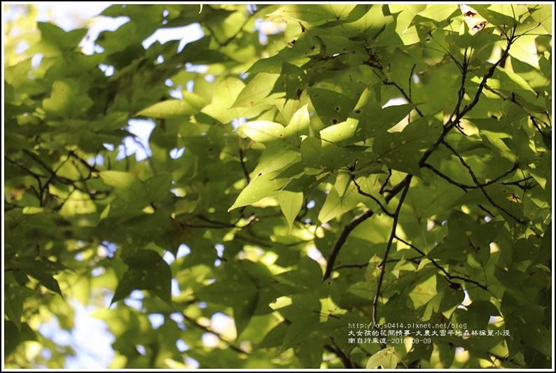 大農大富平地森林(南自行車道楓葉林)-2018-09-31.jpg