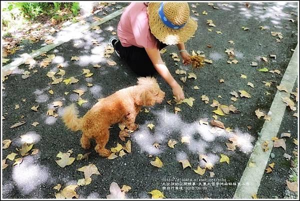 大農大富平地森林(南自行車道楓葉林)-2018-09-32.jpg