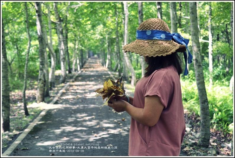 大農大富平地森林(南自行車道楓葉林)-2018-09-35.jpg
