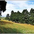 赤柯山金針花(小瑞士農場)-2018-08-06.jpg