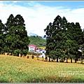 赤柯山金針花(小瑞士農場)-2018-08-05.jpg