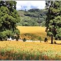 赤柯山金針花(小瑞士農場)-2018-08-08.jpg