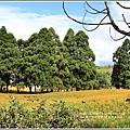 赤柯山金針花(小瑞士農場)-2018-08-11.jpg