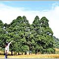 赤柯山金針花(小瑞士農場)-2018-08-13.jpg