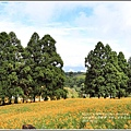 赤柯山金針花(小瑞士農場)-2018-08-18.jpg