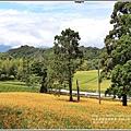 赤柯山金針花(小瑞士農場)-2018-08-17.jpg