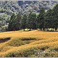 赤柯山金針花(小瑞士農場)-2018-08-20.jpg