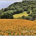赤柯山金針花(小瑞士農場)-2018-08-25.jpg