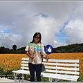 赤柯山金針花(小瑞士農場)-2018-08-30.jpg