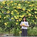 軟枝黃蟬-2018-09-09.jpg