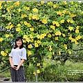 軟枝黃蟬-2018-09-11.jpg