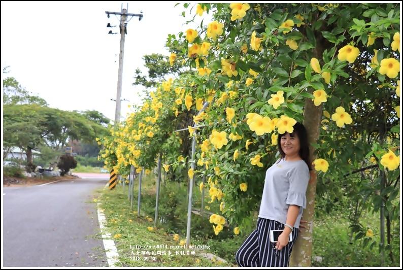 軟枝黃蟬-2018-09-14.jpg
