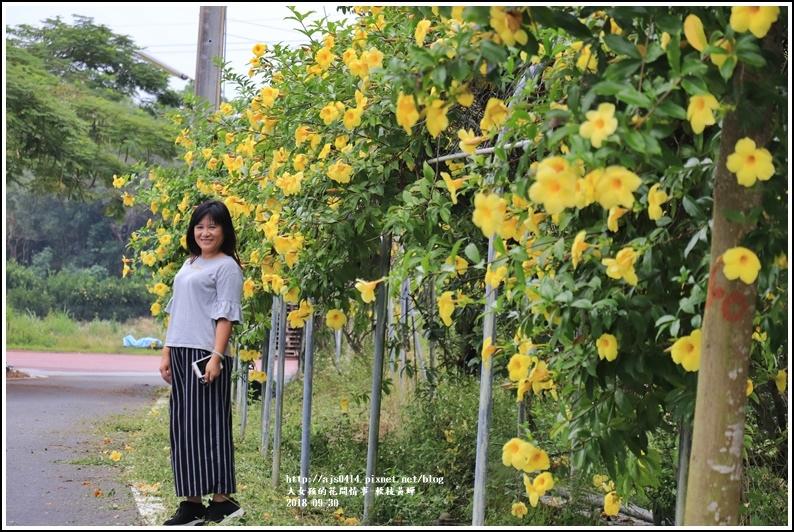 軟枝黃蟬-2018-09-15.jpg