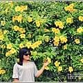 軟枝黃蟬-2018-09-19.jpg