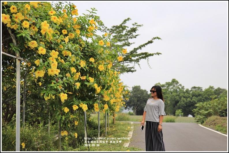軟枝黃蟬-2018-09-20.jpg