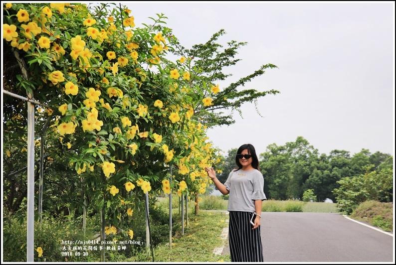 軟枝黃蟬-2018-09-21.jpg