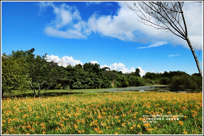 高寮竹林湖-2018-09-01.jpg