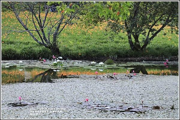 高寮竹林湖-2018-09-25.jpg