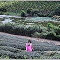 高寮竹林湖-2018-09-36.jpg