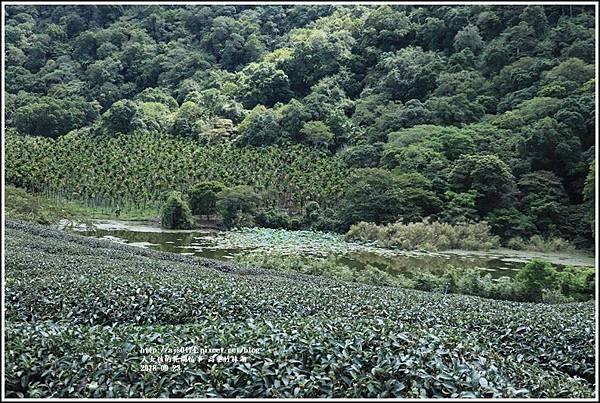 高寮竹林湖-2018-09-38.jpg