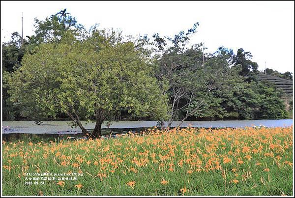 高寮竹林湖-2018-09-49.jpg