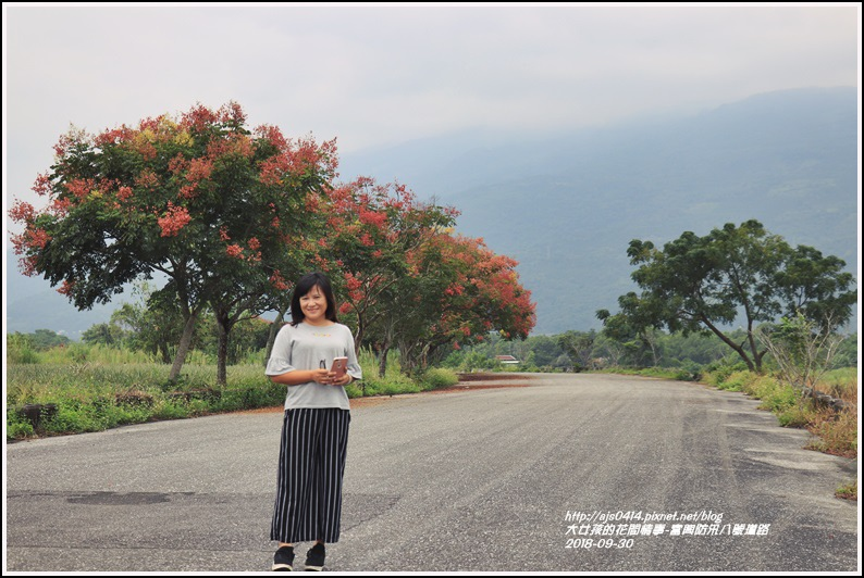 富興防汛八號道路台灣欒樹-2018-09-05.jpg