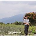 富興防汛八號道路台灣欒樹-2018-09-06.jpg