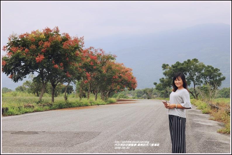 富興防汛八號道路台灣欒樹-2018-09-04.jpg