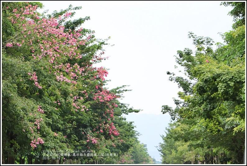 鳳林鎮永豐路美人花-2018-10-04.jpg