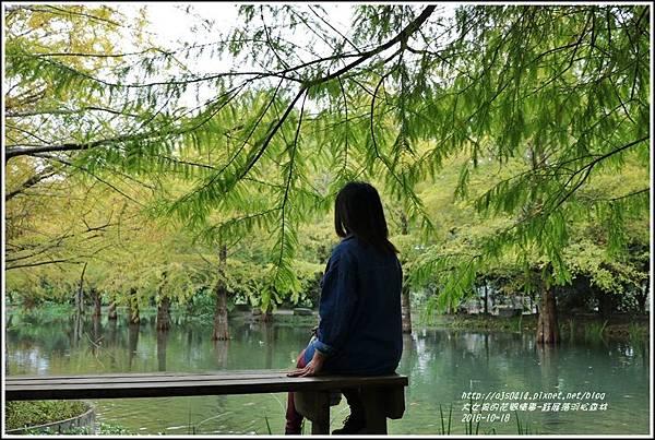 鈺展落羽松森林-2018-10-28.jpg