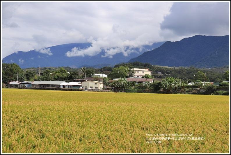 池上伯朗大道(黃金稻田)-2018-11-06.jpg