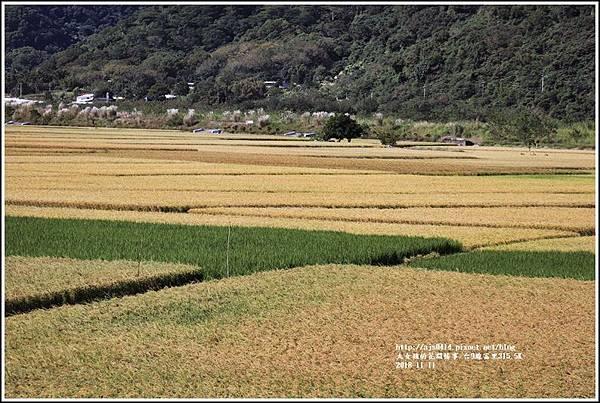 富里段黃金稻田-2018-11-03.jpg