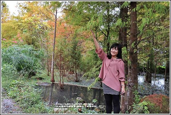 南華山下路落羽松林-2018-12-32.jpg